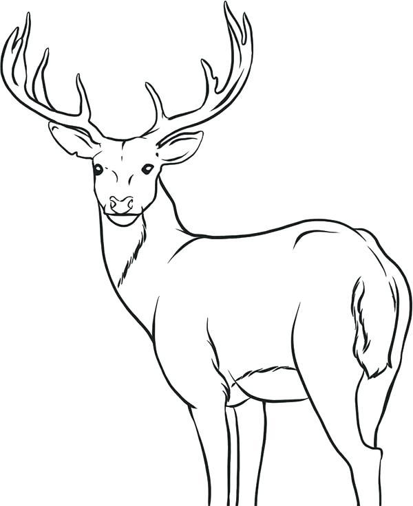 600x736 Deer Coloring Page Deer Coloring Page John Deere Coloring Pages