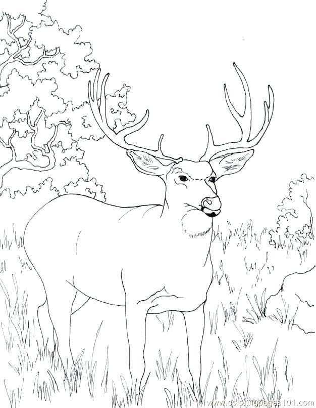 626x806 Deer Coloring Page Key Deer Coloring Pages John Coloring Pages