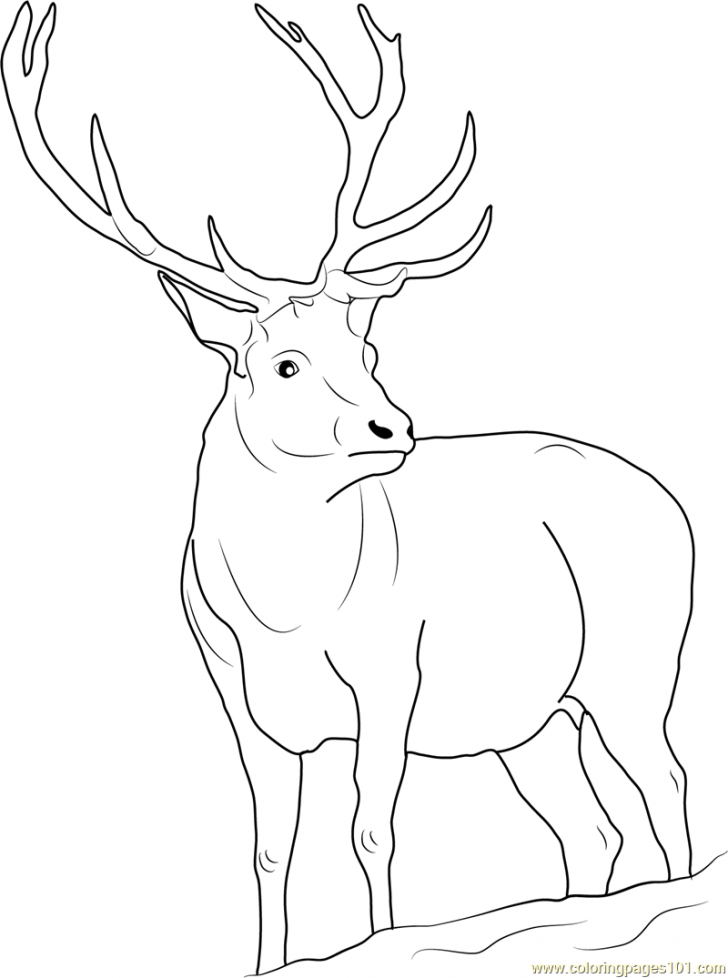 728x978 Deer Coloring Pages And Print For Antler Page Animal Whitetail