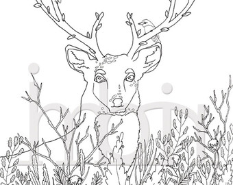 340x270 Antler Coloring Page Etsy