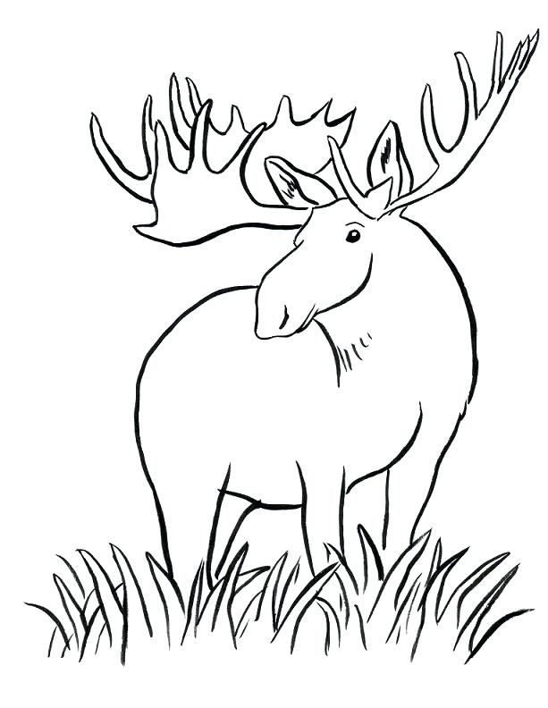 613x792 Moose Coloring Page Moose Coloring Page Moose Antlers Coloring