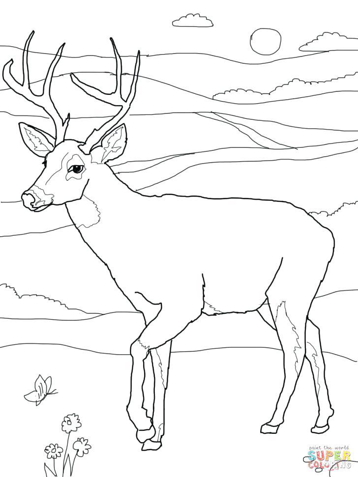 728x971 Baby Deer Printable Coloring Pages Of Animal Bucks Antlers Free