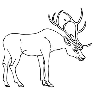 300x300 D Is For Deer Coloring Page D Is For Deer Coloring Page