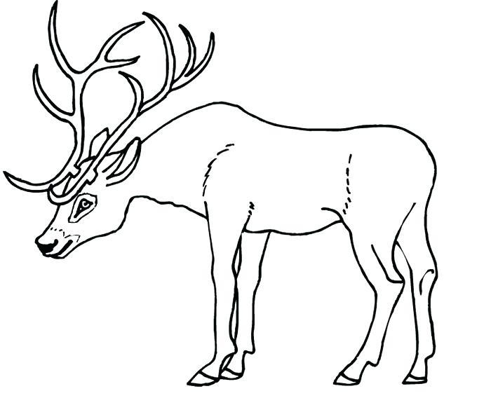 700x568 Deer Antler Template Deer Antlers Coloring Page Deer Antler Mount