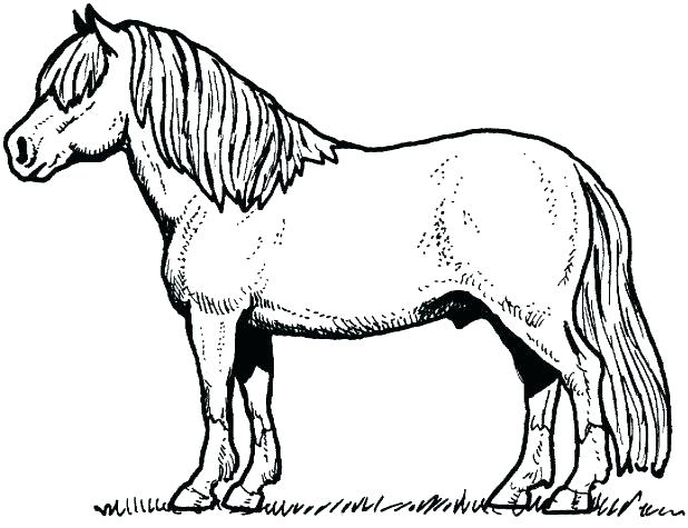 618x475 Free Horse Coloring Pages Appaloosa Horse Coloring Pages Free Baby