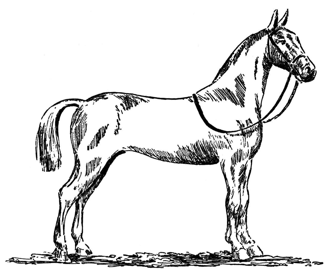 1275x1050 Free Horse Coloring Pages