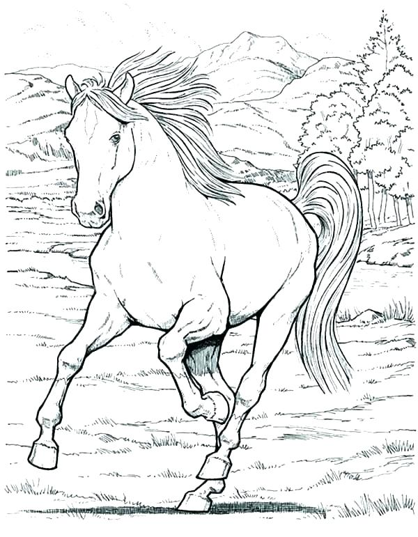 600x771 Horse Coloring Pages For Adults Plus Pretty Horses Coloring Pages