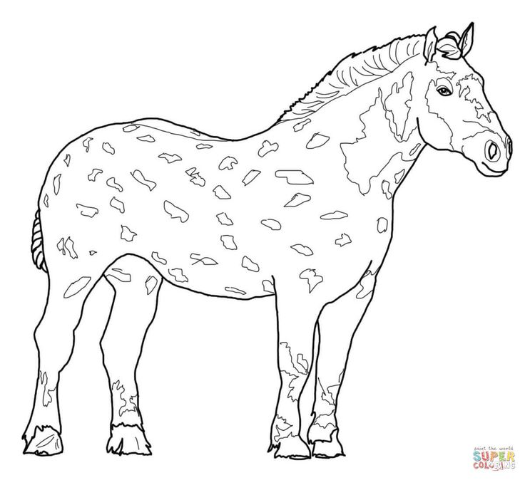 736x674 Best Coloring Horses Images On Horse, Horses