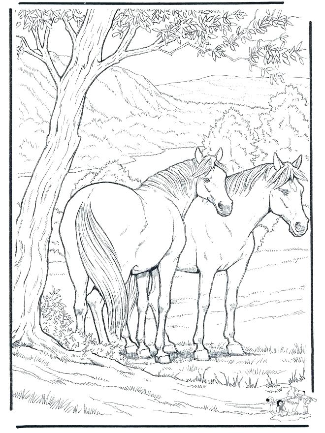 660x880 Horse Coloring Pages Free Beautiful Horse Coloring Pages Free