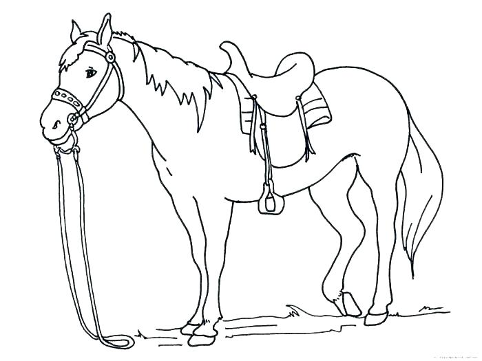 700x525 Horse Head Coloring Page Horse Head Coloring Page This Is Coloring