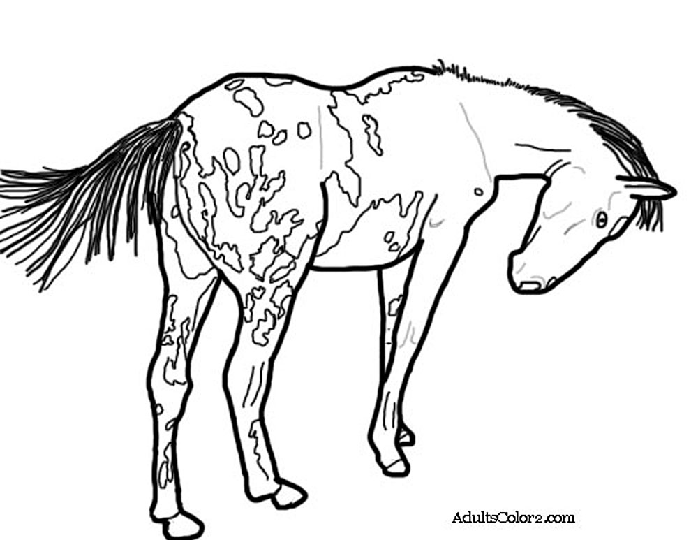 1000x773 Spotted Horse Coloring Pages
