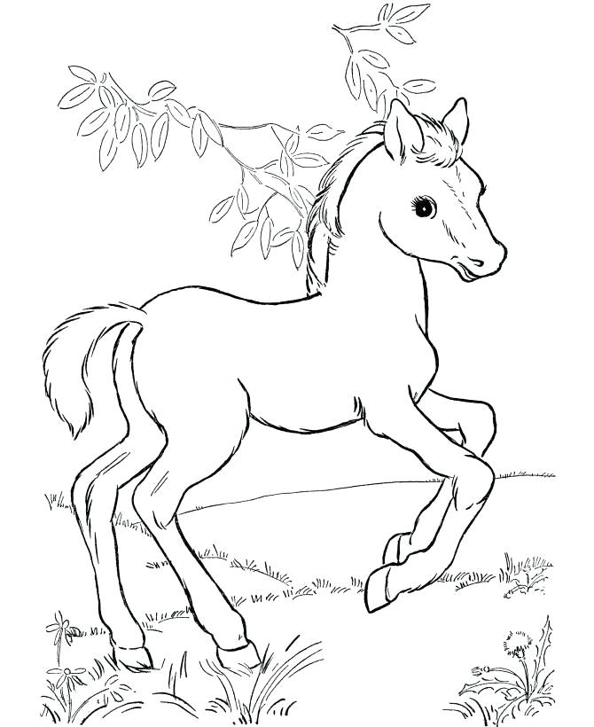 670x820 Coloring Pages For Kids Appaloosa Horse With Leopard Spotted Coat