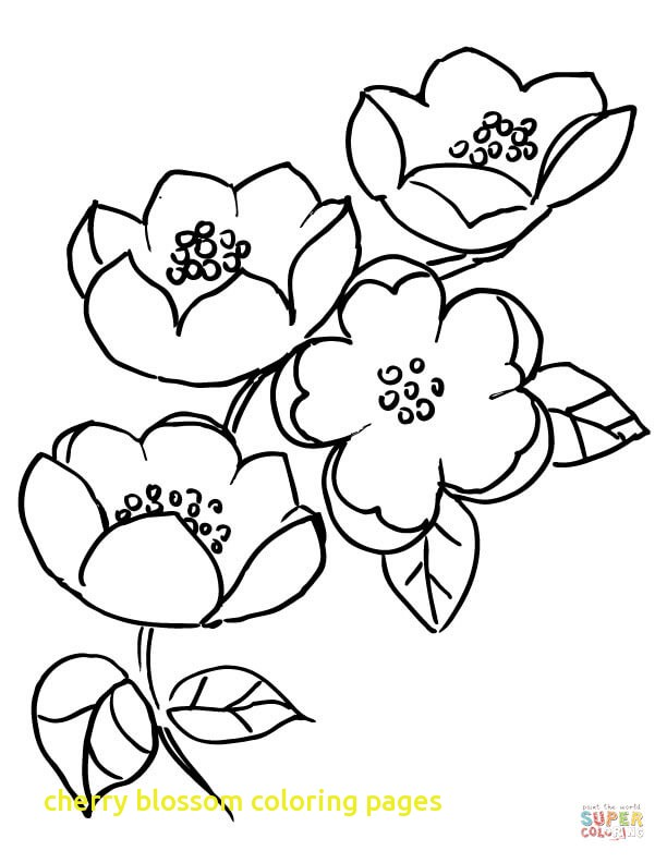 612x792 Cherry Blossom Coloring Pages With Apple Blossom Branch Coloring