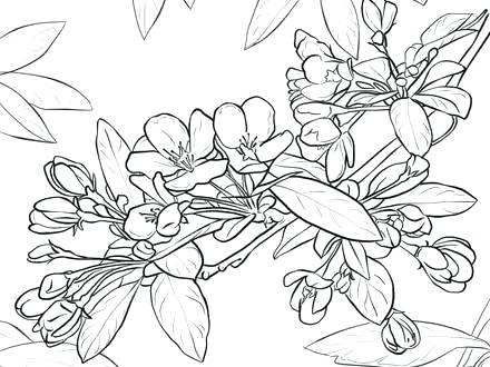 440x330 Coloring Silly Chili Printable Apple Blossom Shopkin Coloring Page