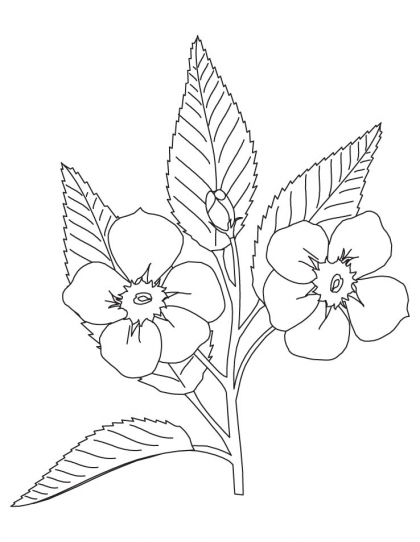 420x542 Apple Blossom Coloring Page Plants Flowers