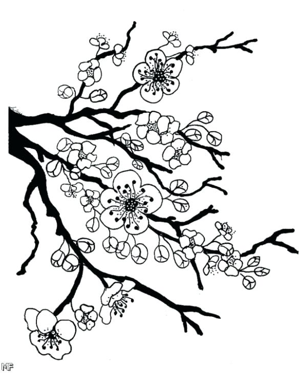 584x730 Coloring Apple Blossom Coloring Page Book Cherry Flower Fun Pages