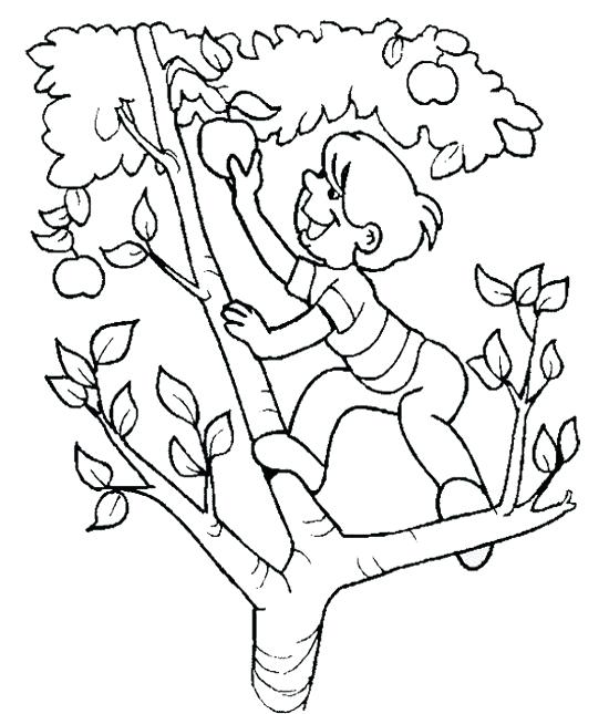 550x645 Apple Tree Coloring Page The Child Apple Picking The Apple Tree