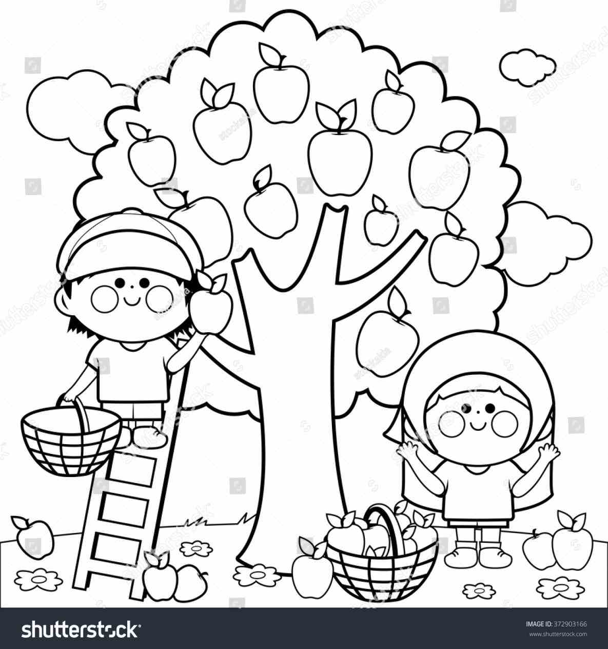 1185x1264 Apple Picking Coloring Pages Web Coloring Pages