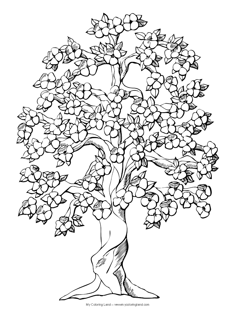 816x1056 Apple Tree Coloring Page Amusing Apple Tree Coloring Page In Apple