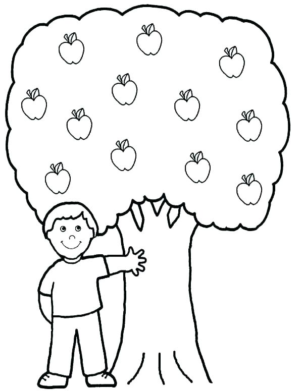 600x775 Apple Tree Coloring Page Apple Tree Coloring Sheets Printable