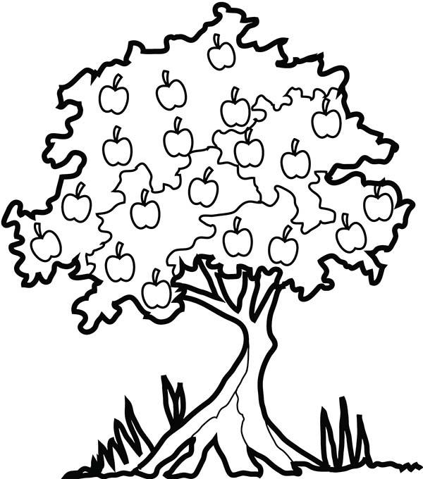 600x680 Apple Tree