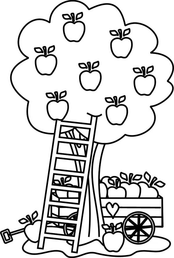 600x887 Stylish Design Ideas Apple Tree Coloring Page Pages Barriee