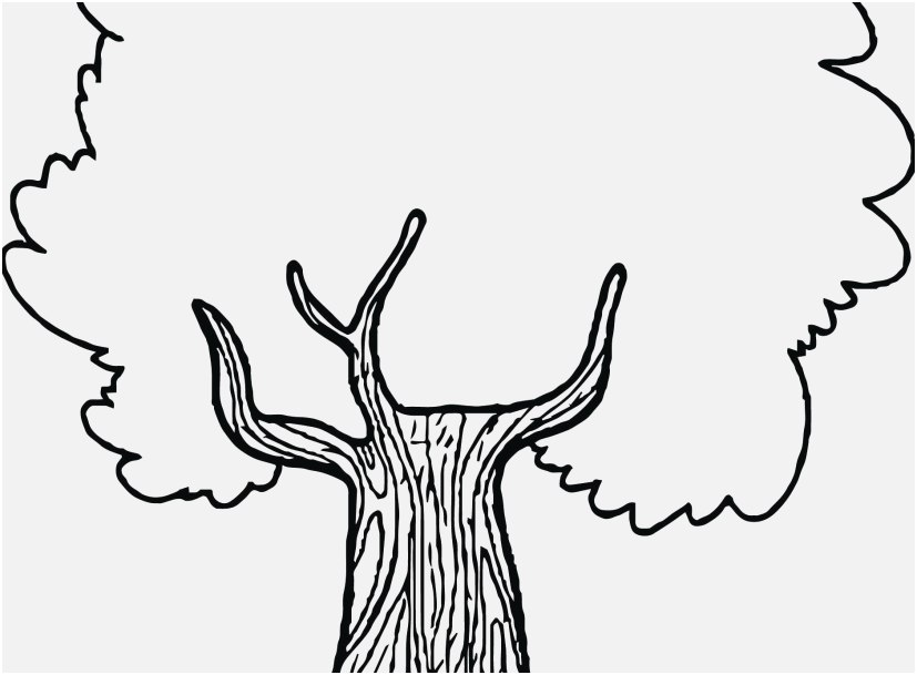 827x609 Tree Coloring Pages Photographs New Great Apple Tree Color Page
