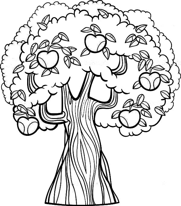 600x684 Apple Tree Coloring Page