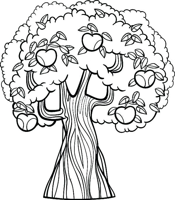 600x684 Apple Tree Coloring Page Printable Coloring Image Apple Tree