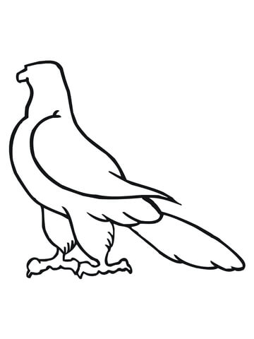 360x480 Falcon Outline Sketches Coloring Page