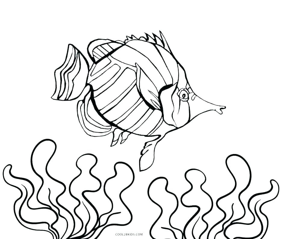 970x793 Fish Coloring Pages Free Fish Tank Coloring Page Aquarium Coloring
