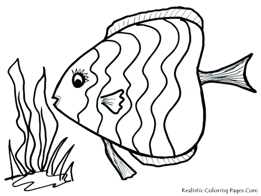 878x659 Realistic Fish Coloring Pages Tropical Fish Coloring Page Tropical