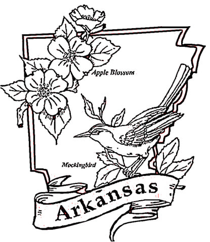 415x480 Arkansas State Flower Coloring Page Color Bros