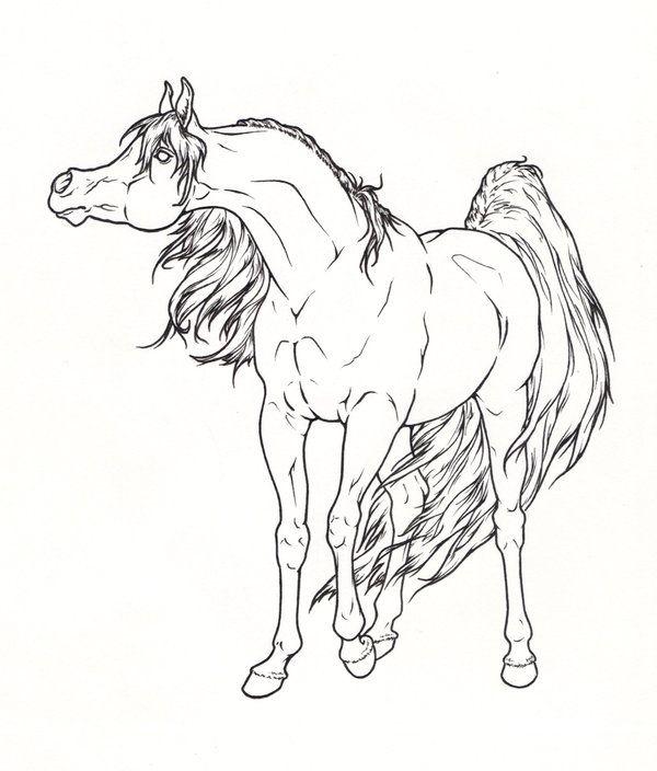 600x704 Arabian Horse Lineart