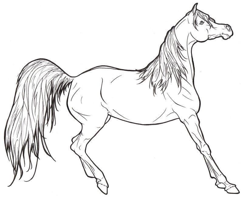 800x653 Arabian Horse Lineart