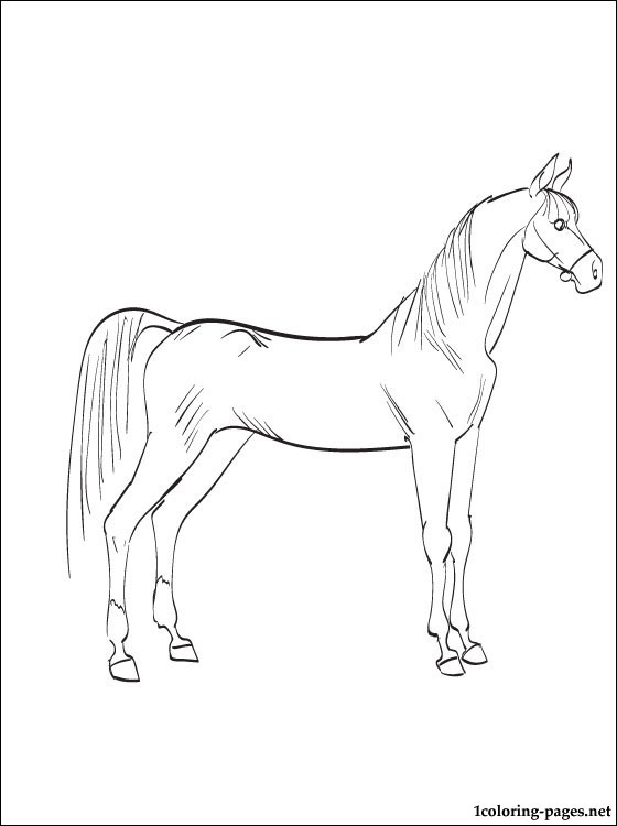 560x750 Arabian Horse Coloring Page Coloring Pages