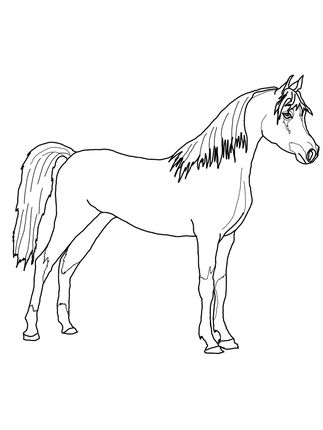 323x430 Arabian Horse Coloring Page Projects Printable