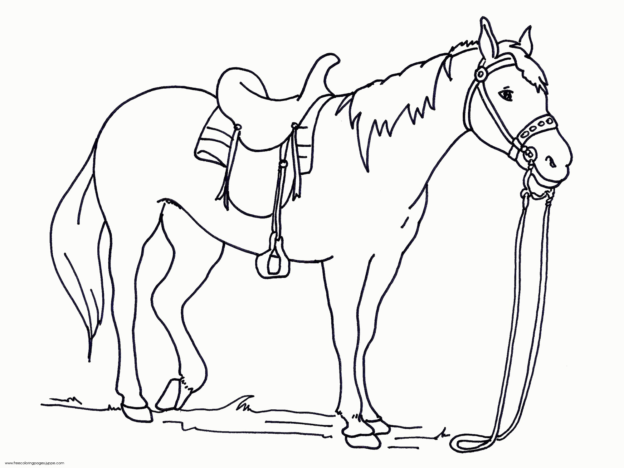 2000x1500 Coloring Pages Of Real Horses Fresh Running Arabian Horse Page