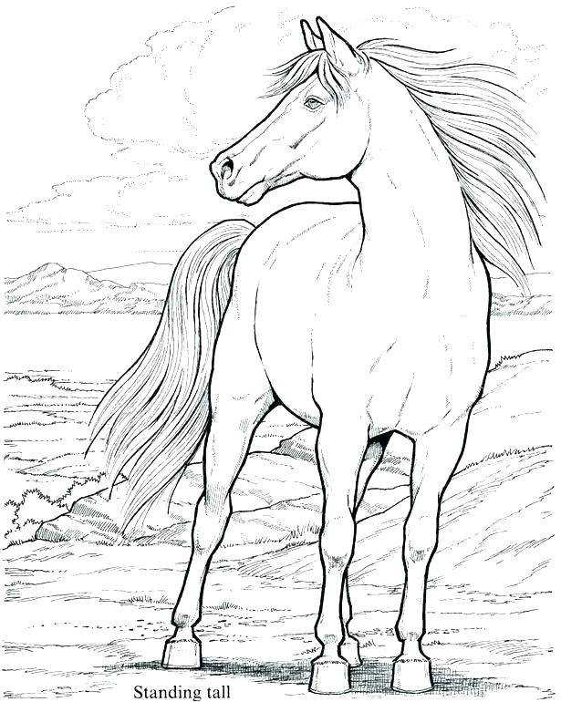615x770 Horses At Work Coloring Pages The Medium Arabian Horse Coloring