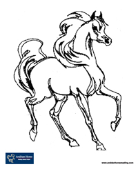 200x245 Amazing Idea Arabian Horse Coloring Pages To Print
