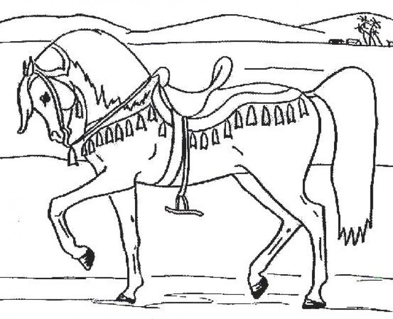 800x649 Innovation Idea Arabian Horse Coloring Pages To Print