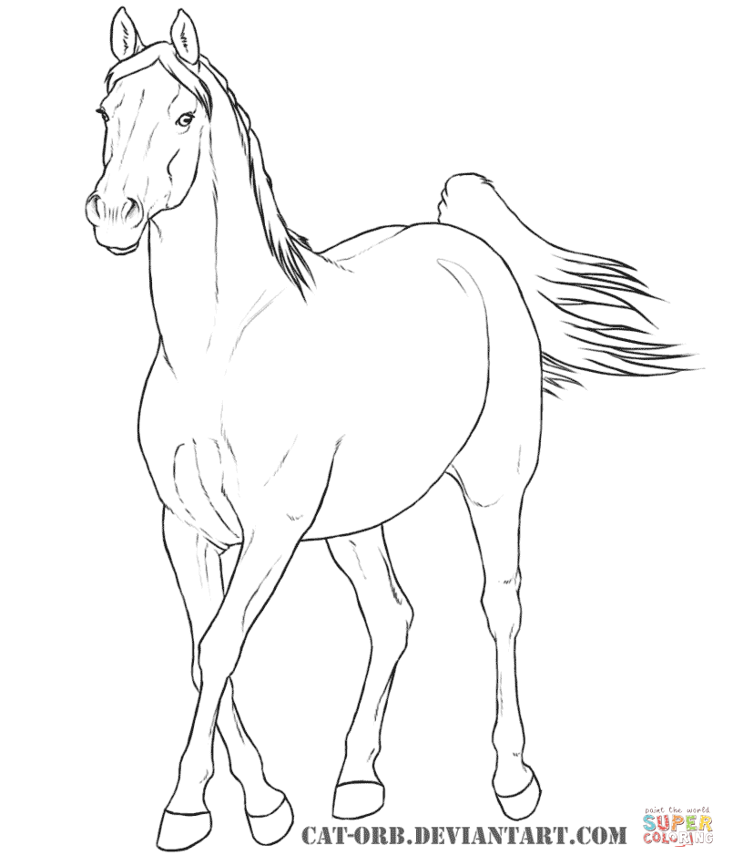 805x950 Plush Arabian Horse Coloring Pages To Print