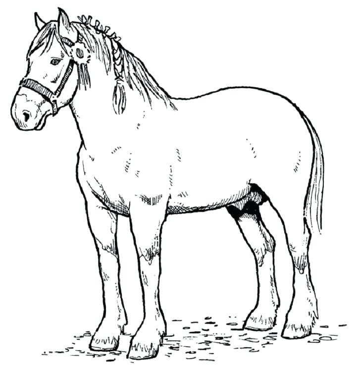 721x747 Realistic Arabian Horse Coloring Pages Heart For Teenagers Page