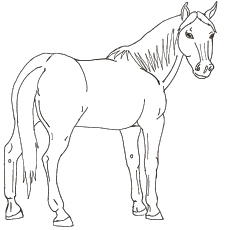 230x230 Top Free Printable Horse Coloring Pages Online
