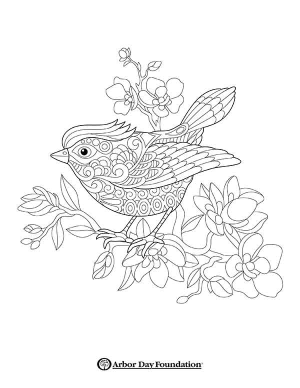 600x776 Coloring Pages