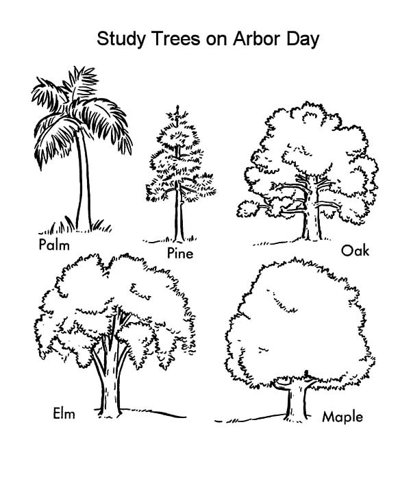 600x734 Study Trees On Arbor Day Coloring Pages Best Place To Color