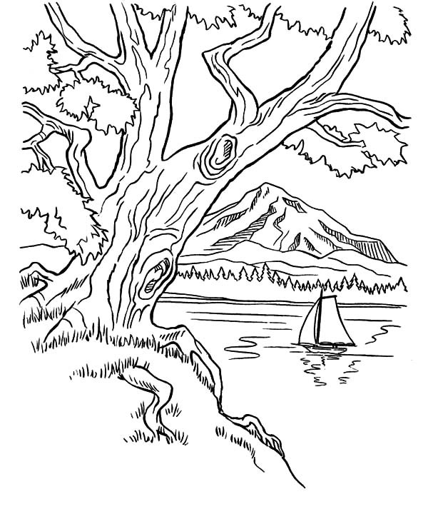 600x734 Trees On Mountains Area On Arbor Day Coloring Pages Best Place