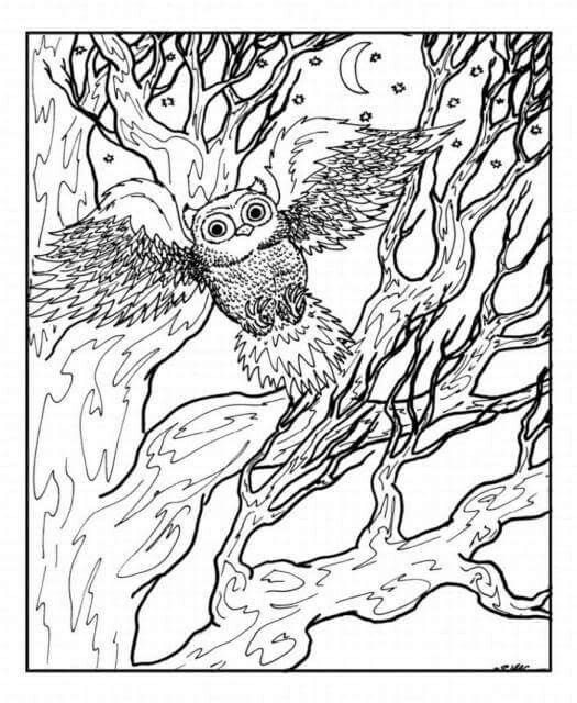 525x640 Best Coloring Pages Images On Coloring Pages