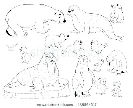 450x365 Arctic Animals Coloring Pages Arctic Fox Coloring Page Best