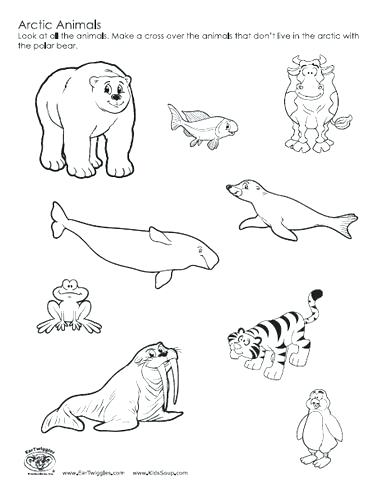 387x494 Arctic Animals Coloring Sheets Polar Animals Coloring Pages Arctic